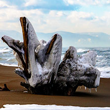 石狩浜スノーシュー体験